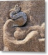 Peringuey's Adder Burying Itself In Sand Metal Print