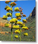 Perry's Agave Metal Print