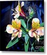 Peruvian Lily In My Garden Metal Print