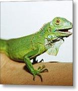 Pet Iguana Metal Print