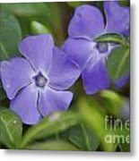 Petal Me Purple Metal Print