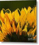 Petales De Soleil - A41b Metal Print by Variance Collections