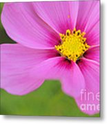 Petaline - P01a Metal Print by Variance Collections