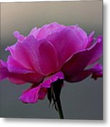 Petals And More Metal Print