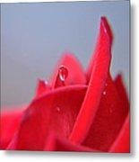 Petals And Water Metal Print