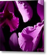 Petals Galore Metal Print
