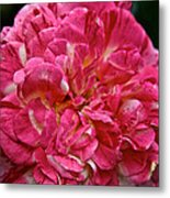 Petals Petals And More Petals Metal Print