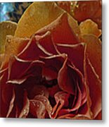 Petel Patterns Metal Print