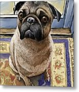 Hungry Pug Metal Print