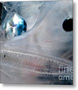 Phantom Anglerfish Metal Print