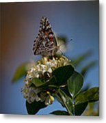 Phaon Crescent Butterfly Metal Print