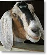 Photogenic Goat Metal Print