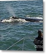 Photographer On Whale Watching Boat Metal Print