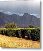 Picacho Peak Hedge Metal Print