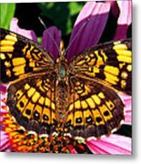 Picture Perfect    Butterfly 003 Metal Print