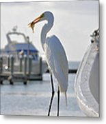 Piggy Perch For Breakfast Metal Print