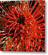Pincushion Detail Metal Print