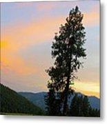 Pine And A Painted Sky Metal Print