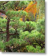Pine And Autumn Colors In A Japanese Garden II Metal Print