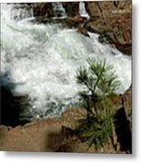 Pine And Falls Glen Alpine Falls Metal Print