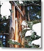 Pine Bark Metal Print by Lisa  Spencer
