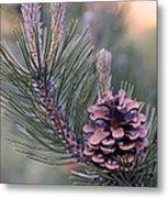 Pine Cone At Sundown Metal Print