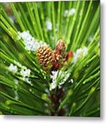 Pine Cone Cloeup Metal Print