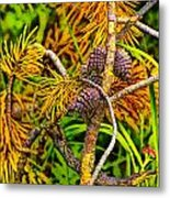 Pine Cones And Needles On A Branch Metal Print