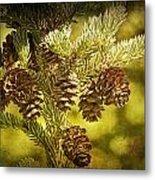 Pine Cones No.056 Metal Print