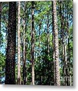 Pine Patch Metal Print