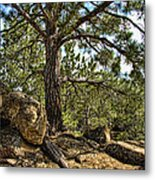 Pine Tree And Rocks Metal Print