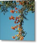 Pine Tree With Berries Metal Print