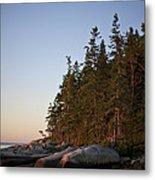 Pine Trees Along The Rocky Coastline Metal Print by Hannele Lahti