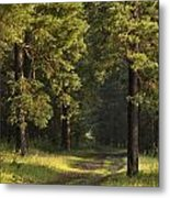Pine Trees Forest Metal Print