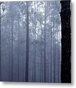 Pine Trees In Cloud In The Forest Corona Metal Print