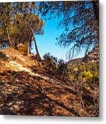 Pine Trees In El Chorro. Spain Metal Print
