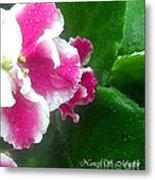 Pink African Violets And Leaves Metal Print