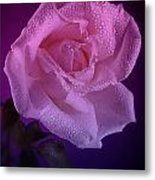 Pink And Blue Rose In The Rain Metal Print