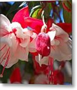 Pink And Red Fuchsia Metal Print