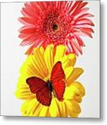 Pink And Yellow Mums Metal Print