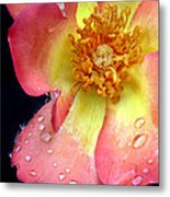 Pink And Yellow Rose Metal Print