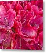 Pink Azalea Metal Print