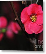 Pink Blossom In The Evening Metal Print