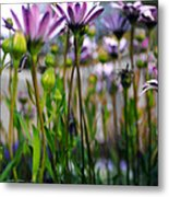 Pink Blossoming Flowers Metal Print