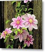 Pink Climatis Flower Metal Print