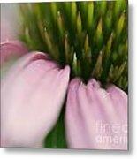 Pink Cone Flower Metal Print