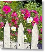 Pink Cosmos Flowers And White Picket Fence Metal Print