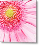 Pink Delight II Metal Print by Tamyra Ayles