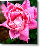 Pink Double Knockout Rose Metal Print