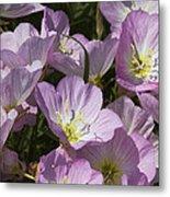 Pink Evening Primrose Wildflowers Metal Print